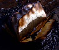 被烧的书 库存图片