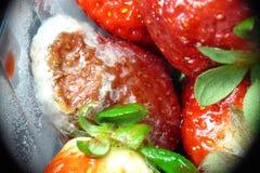 被烧的冷冻机草莓 免版税图库摄影