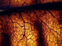 被烧的叶子 免版税图库摄影
