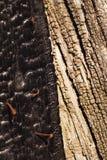 被烧的和未烧过的老木纹理或背景 库存照片