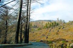 被烧的和击倒的树 免版税图库摄影
