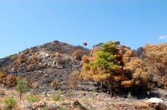 被烧的小山顶 库存照片