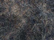 被烧的干燥秸杆 图库摄影
