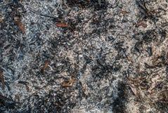 被烧的干草纹理背景 免版税库存图片