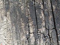 被烧的木头纹理 库存照片