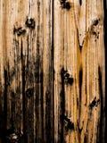 被烧的木纹理背景 免版税库存照片