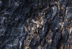 被烧的木头纹理 免版税图库摄影