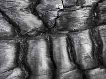 被烧的木头纹理 免版税库存图片