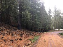 被烧的树临近山路 免版税库存图片