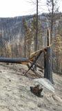 被烧的树和灰 免版税库存图片