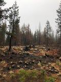 被烧的树在森林里 免版税库存图片