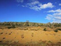 被烧的树在火地群岛 免版税图库摄影