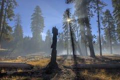 被烧的树桩和烟从受控烧伤,拉森火山国家公园 图库摄影