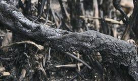 被烧的树的片断 图库摄影