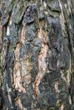 被烧的树皮 免版税库存图片