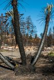被烧的棕榈树 免版税库存图片
