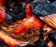 被烧的棕榈树 免版税库存照片