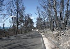 被烧的森林公路 库存图片