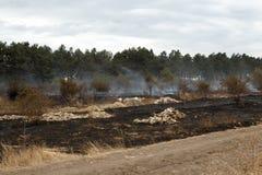 被烧的森林地面 免版税库存图片