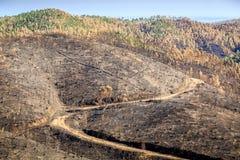 被烧的森林横向 库存照片