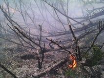 被烧的森林火焰 库存照片