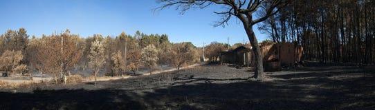 被烧的森林-重创的Pedrogao全景沿着一个被烧的棚子的 库存图片