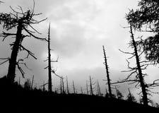 被烧的森林 库存图片