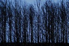 被烧的森林 免版税图库摄影