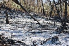 被烧的森林 库存照片