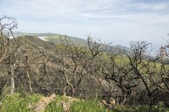 被烧的灌木,在谷的多云,保罗da serra高平原,马德拉岛 免版税库存照片