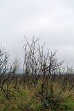 被烧的灌木 库存图片