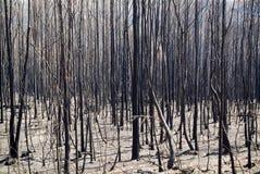 被烧的结构树 库存图片