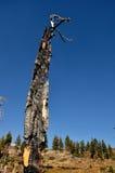 被烧的结构树 免版税库存照片