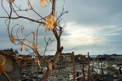被烧的结构树 图库摄影