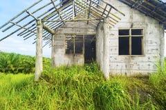 被烧的老房子长满与灌木 库存图片
