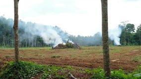 从被烧的老树的烟 准备从新的种植园概念 影视素材
