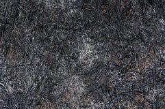 被烧的草纹理 免版税库存图片