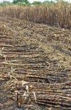 被烧的藤茎剪切糖 免版税图库摄影