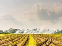 被烧的领域在泰国 库存图片