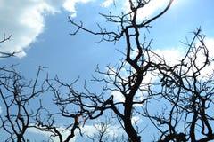 被烧的结构树 免版税库存图片