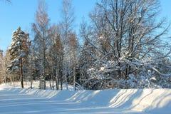 被犁的冬天街道在阳光下 库存图片
