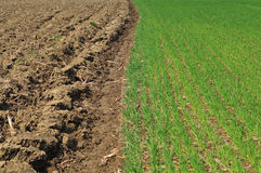 被犁的土地和麦田 免版税库存图片