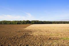 被犁的土壤和秸杆发茬 库存照片