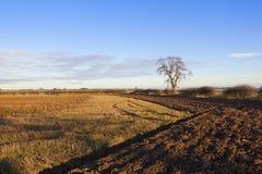 被犁的土壤和秸杆发茬 免版税图库摄影
