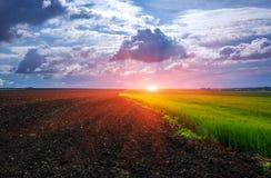 被犁的领域和半领域麦子在日落 免版税库存图片