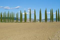 被犁的领域和柏胡同在一晴朗的9月天 意大利托斯卡纳 库存照片