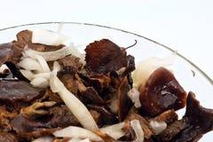 被盐溶的盘玻璃蘑菇 库存照片