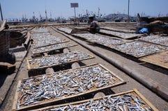 被盐溶的鱼 免版税库存图片
