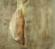 被盐溶的鱼 图库摄影