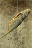 被盐溶的鱼 库存图片